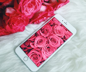 beautiful, red roses, and fashion image