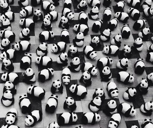 panda, bear, and black image