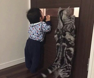 cat, animal, and baby image