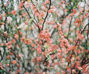 film, flowers, and happiness image
