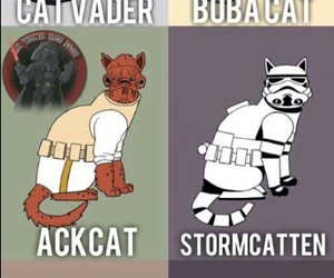 star wars and cat image
