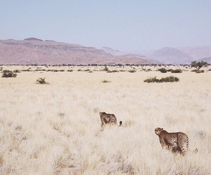 animal, nature, and travel image