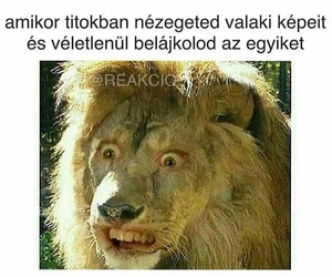 magyar, funny, and idézet image