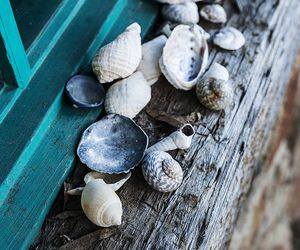 sea, shell, and beach image