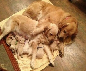dog, puppy, and family image