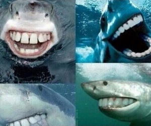 shark, funny, and teeth image