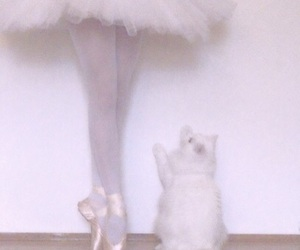cat, ballet, and white image