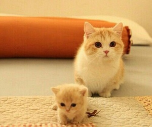 animals, cats, and kitten image
