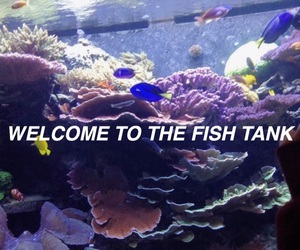 aesthetic, blue, and fish image