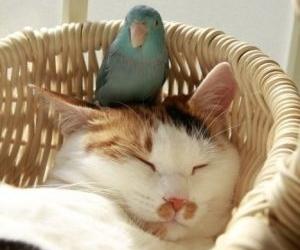 cat, animal, and bird image