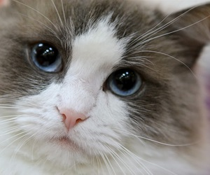 cat, pet, and eye image