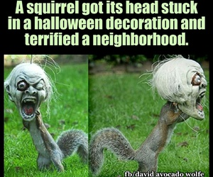 funny, Halloween, and squirrel image