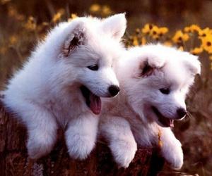 hunde, welpen, and freundschaft image