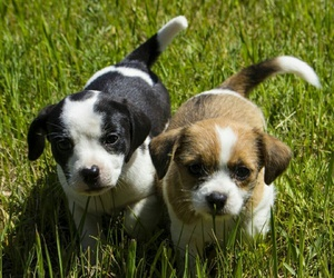 hunde and welpen image