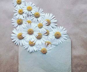 flowers, daisy, and envelope image