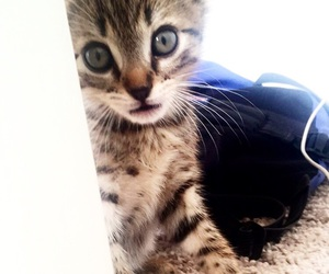 baby girl, cute cat, and kitten image