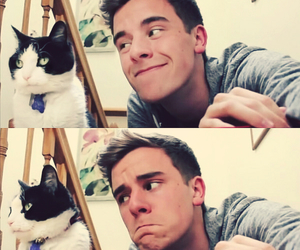 cat, connor franta, and cute image
