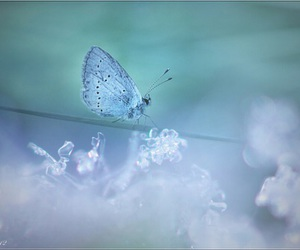 blue, butterfly, and nature image