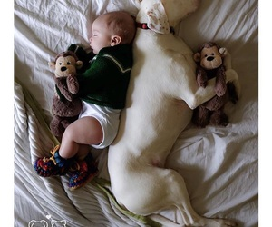 baby, doge, and forevertogether image