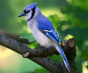 birds, green, and jays image