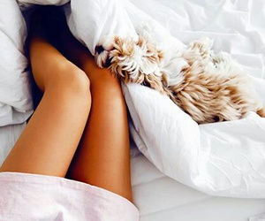 bed, dog, and girl image