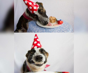 birthday and dogs image