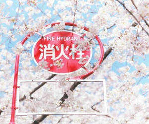 blossom, japan, and flowers image
