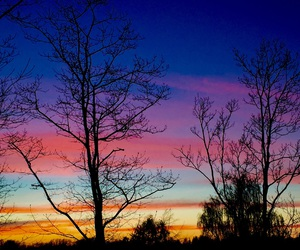 skies, trees, and sunset image