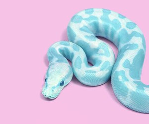 snake, pink, and blue image