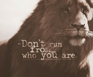 lion, quotes, and run image