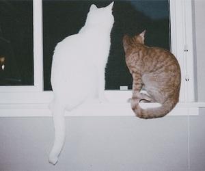 cat, indie, and vintage image