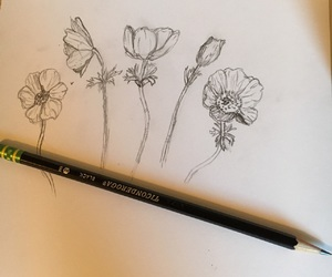 flowers and sketch image
