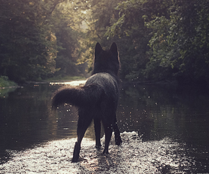 black dog, dog, and wolf image