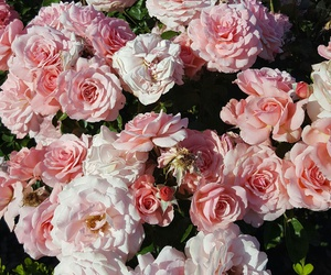 california adventure, disneyland, and flowers image