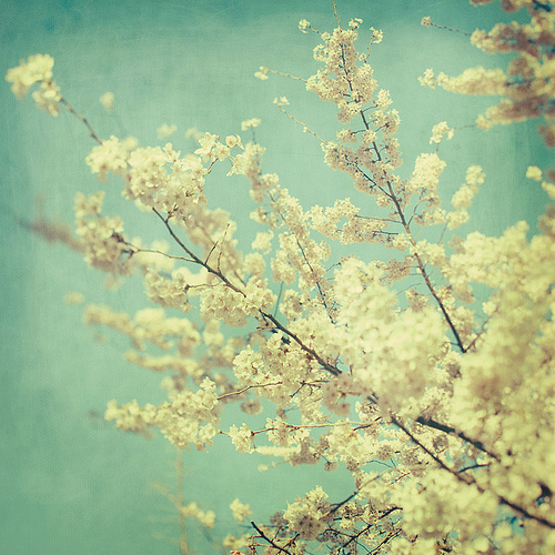 Blue-flowers-photography-sky-spring-blossoms-favim.com-313170_large