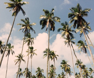beach, palm trees, and sky image