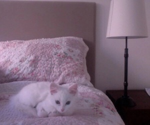 cat, pale, and grunge image