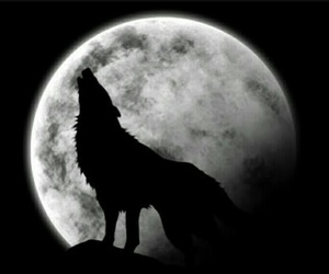 wolf, moon, and lobo image