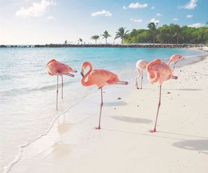 beach, Dominican Republic, and pink image