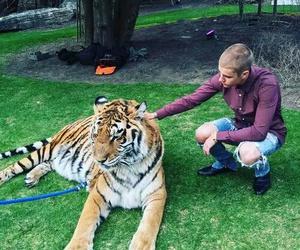 justin bieber, tiger, and bieber image