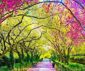 tree, spring, and flowers image