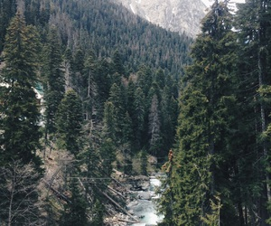 forest, mountains, and river image
