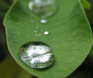beautiful, leaf, and green image