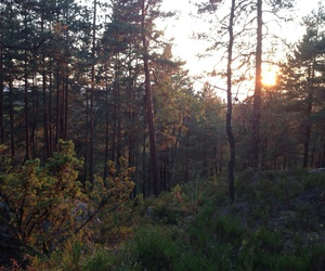 forest, norway, and sunset image
