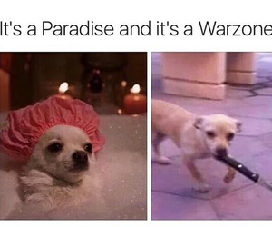 funny, dog, and Pillow Talk image