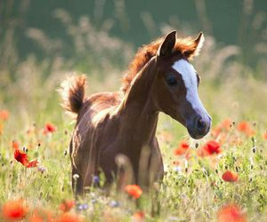 horse, flowers, and foal image
