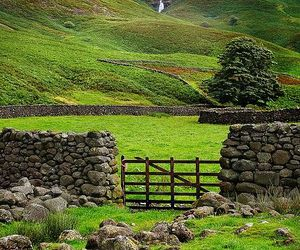 green, nature, and ireland image