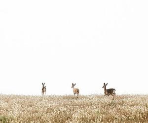 beautiful, photography, and animals image