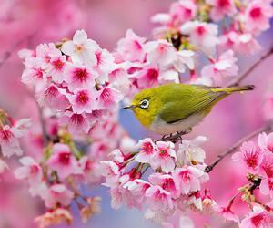 bird, blossom, and bloom image