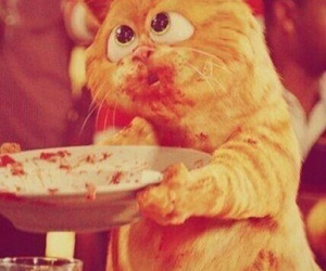 cat, garfield, and food image